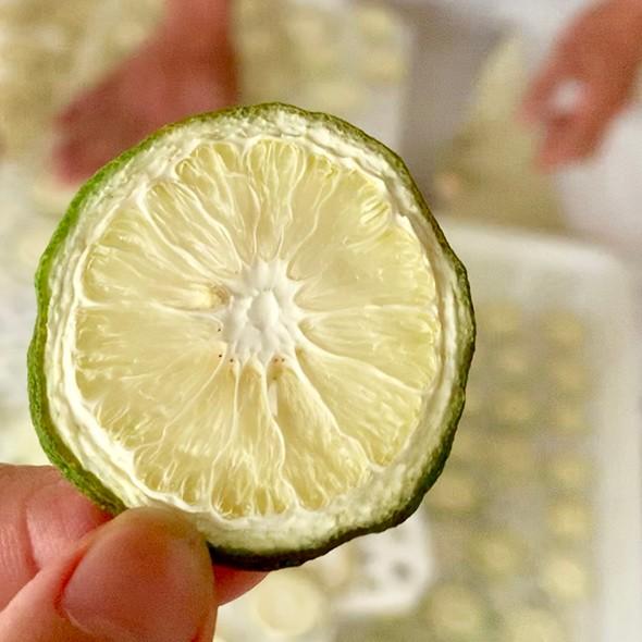 香水柠檬种植基地